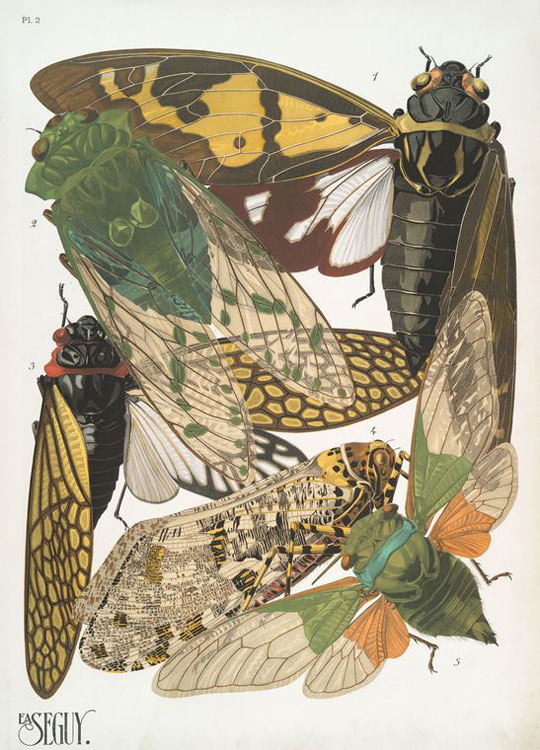 Insect Collages