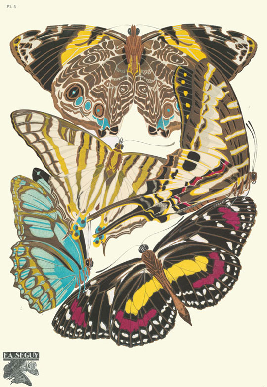 Insect Collages - Peter Surrena