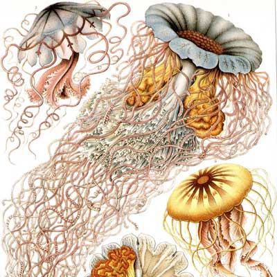 Ernst Haeckel Feature